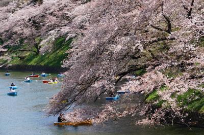 千鳥ヶ淵の桜 九段下~靖国神社~半蔵門
