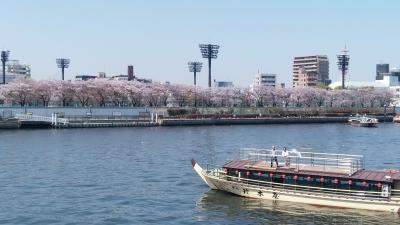 ぶらり兄さんぽ ~桜狩りに隅田堤へ~