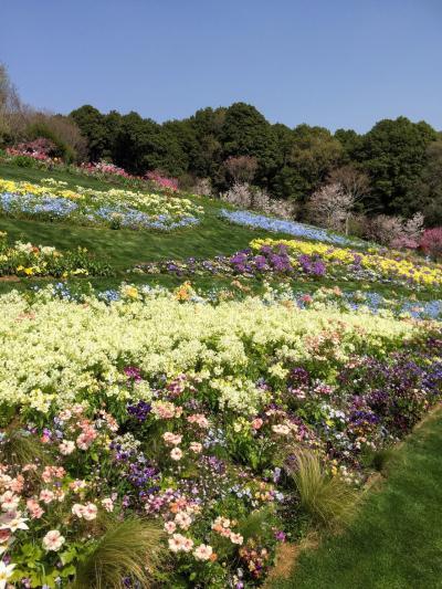 春の花咲く丘と谷戸~里山ガーデン