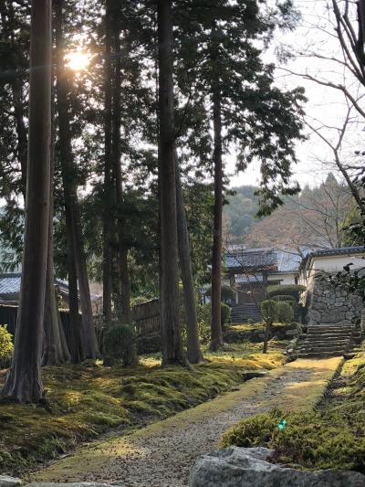 初琵琶湖に、三井寺さんぽ
