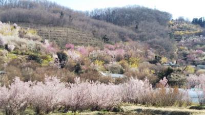 【花見ドライブ2018*花見山】フライングと思いきや満開の花見山と飯坂温泉