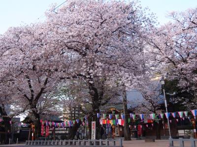 埼玉の春2018 ① フォトジェニック川越!        早朝のお花見&蔵町散策