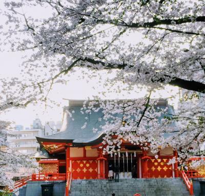 360度見渡す限りの桜の山~新宿界隈でお花見