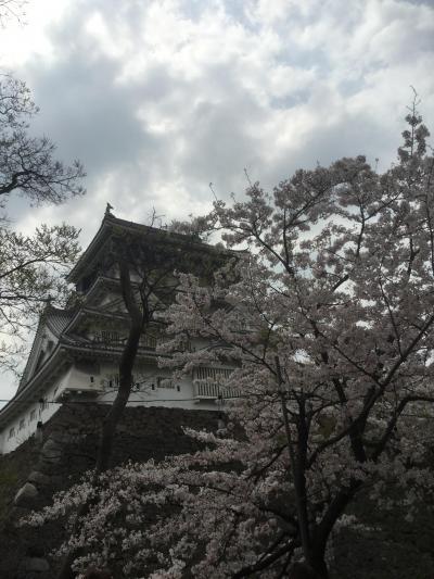 小倉城 桜まつり  皿倉山 日帰り一人旅