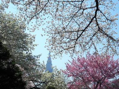 お花見,新宿御苑と新川千本桜。