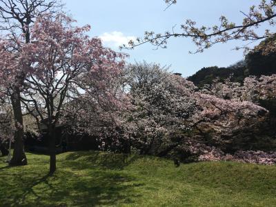 2018年03月 皇居乾門の桜を見に行ってきました。