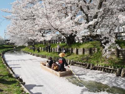 情緒豊かな桜風景
