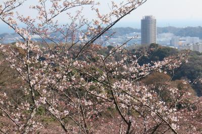 2018桜散歩、横須賀編(3月25日、塚山公園とヴェルニー公園、咲き始めの桜)
