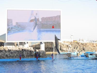 二年半ぶりの名古屋訪問は、話題のLEGOLAND☆懐かしの名古屋港水族館と東山動植物園も♪(2018年春休み)~その1・名古屋港水族館とソロピッツァナポリターナ@大名古屋ビルヂング~