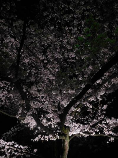 東京2018桜 【1】国立