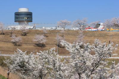 2018桜散歩、成田空港編(T1展望デッキとひこうきの丘、花より飛行機?の1日)