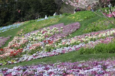 里山ガーデンにお花見&ピクニック