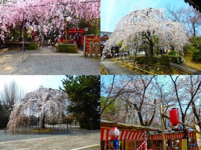 満開を そして花見客を あとはただ待つばかり ~京都の桜巡り~