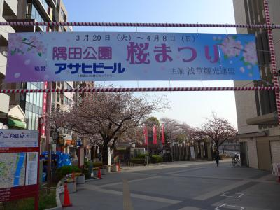 桜が散る前に弾丸日帰り花見ツアーin東京 Part1は早朝の墨田公園!! O(*^-^*)O