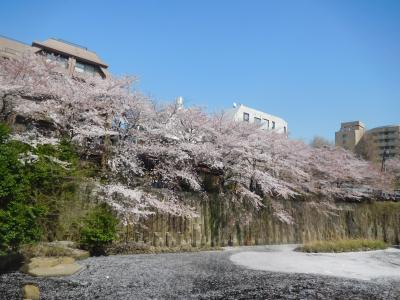 東京2018桜 【3】目黒川