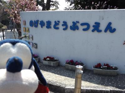 グーちゃん、横浜の桜で花見三昧をする!(野毛山動物園を取材!編)