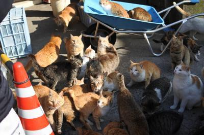 猫島青島ネコいっぱい