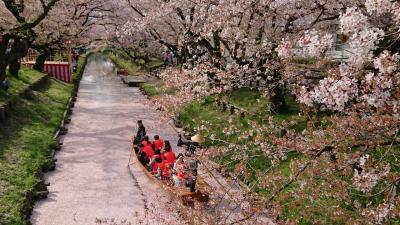 2018年4月 川越ぶらっと散策♪小江戸川越春まつり♪桜♪花筏♪