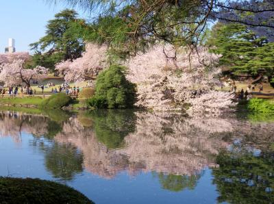 そうだ花を見よう!!~満開の桜を見に皇居から新宿御苑まで~