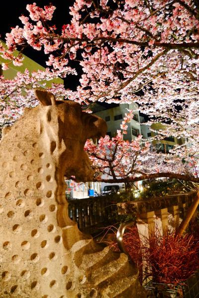 春の熱海。熱海桜とメジロと、グルメ!