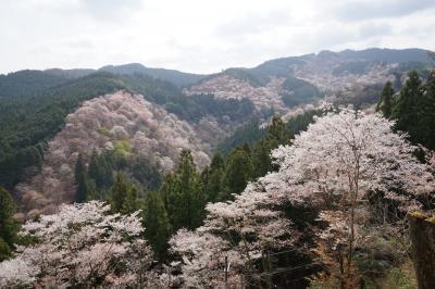 奈良 吉野桜と柿の葉すし食べ比べ&興福寺散策