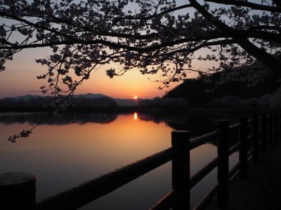 2018年3月、立岡(たちおか)自然公園へ花見に行ってきました。Ⅱ(夜桜観賞)