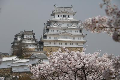 姫路城の桜めぐり