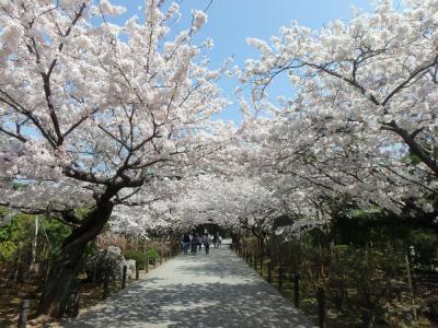 鎌倉お花見