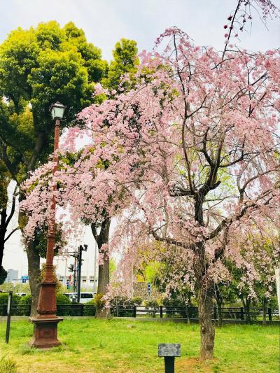 かろうじて桜の花見と、菜の花やシロツメクサ。