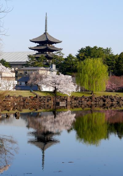 2018.3奈良出張3終-興福寺国宝館,やっぱりいいね奈良ホテル,桜が満開の朝の散歩