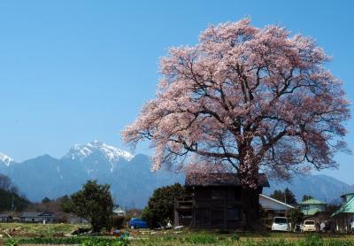 わに塚・山高神代桜 / 甲斐駒バックに見事な桜