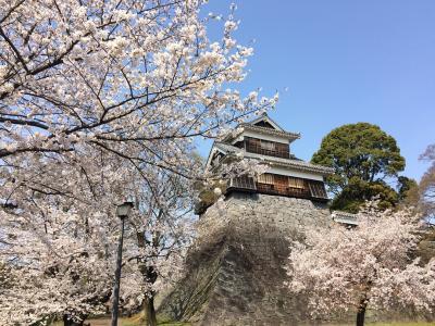 熊本城お花見散歩2018♪