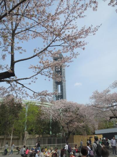 二年半ぶりの名古屋訪問は、話題のLEGOLAND☆懐かしの名古屋港水族館と東山動植物園も♪(2018年春休み)~その3・東山動植物園と名古屋メシ★~