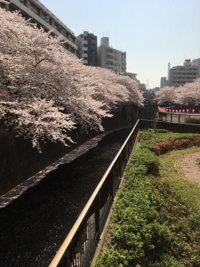 目黒川桜リベンジ