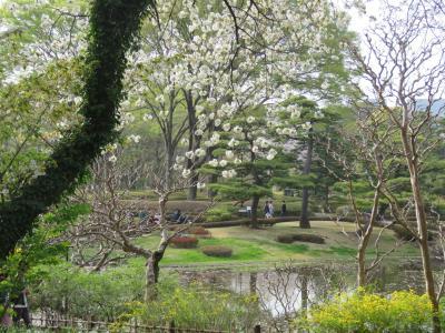 桜見で東御苑を訪問する①東京~大手門~二の丸庭園迄
