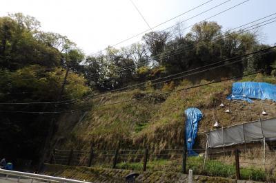緑の巨福呂坂切通