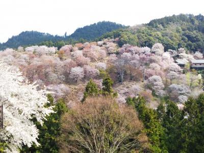 2018.4.1 吉野山の桜 ~青根ヶ峯までの往復~