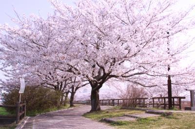 ☆サクラネックレス 2018 須ヶ谷川 桜堤 <愛知県>