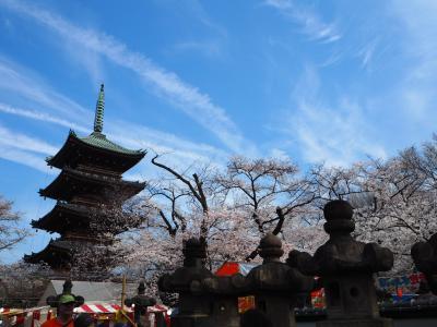 ぶらっとお花見🌸散歩✨in上野公園
