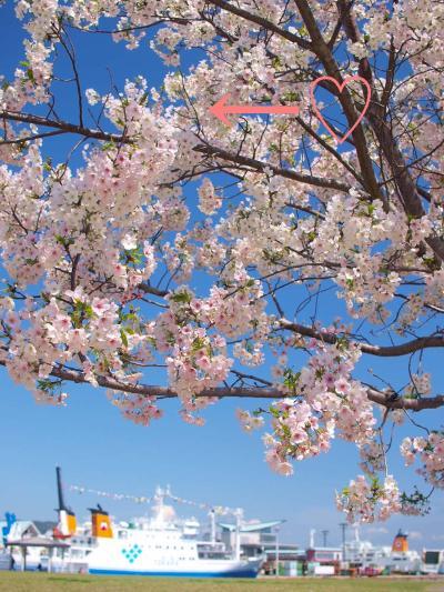 鹿児島市電・市バス・シティビュー一日乗車券で桜めぐり