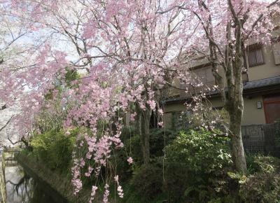 京都・大阪のたび2018年3月(2)京都(ウエスティン京都ホテル、哲学の路、銀閣寺、金戒光明寺)
