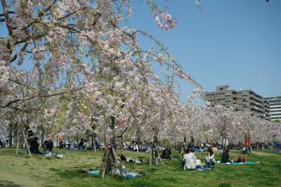 見頃前だろうが満開過ぎだろうがSundays only(泣) 都営まるごときっぷでお花見 by 東京さくらトラム to 尾久の原公園 2weeks in a row
