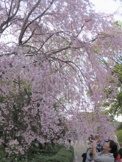 桜見で東御苑を訪問する②汐見坂~本丸迄