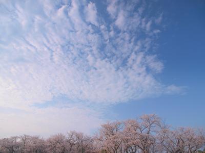 のったりおりたりマイプラン(指宿・知覧) 二日乗車券大人 2,200円 で桜めぐり&お~~~っとでアートな川辺温泉