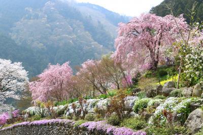 秋川渓谷、乙津花の里の春・・・