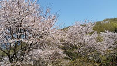 春霞の弘法山公園でまったり(*´ω`)
