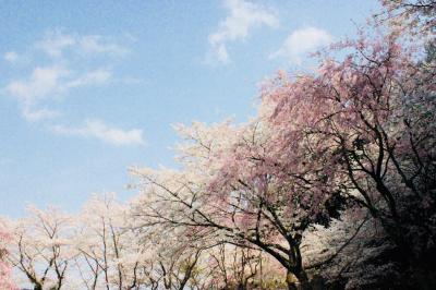 鳥羽 あじ蔵かろかろに泊まる春爛漫の夫婦旅 後編