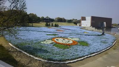30万本のネモフィラと花の美術館の花々・・・・浜名湖ガーデンパークにて