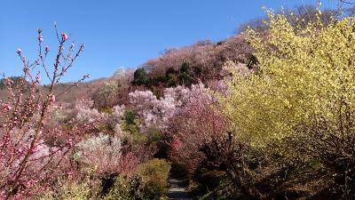 ジェットでびゅ~ん!!&列車&バス旅/高湯連泊+土湯温泉・福島温泉めぐり4泊5日