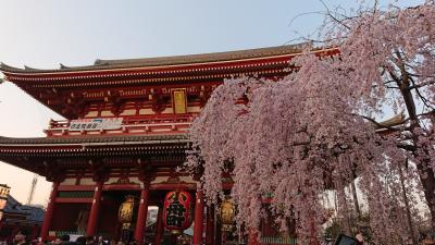 2018年3月 東京桜めぐり♪上野~隅田公園~浅草~日本橋♪